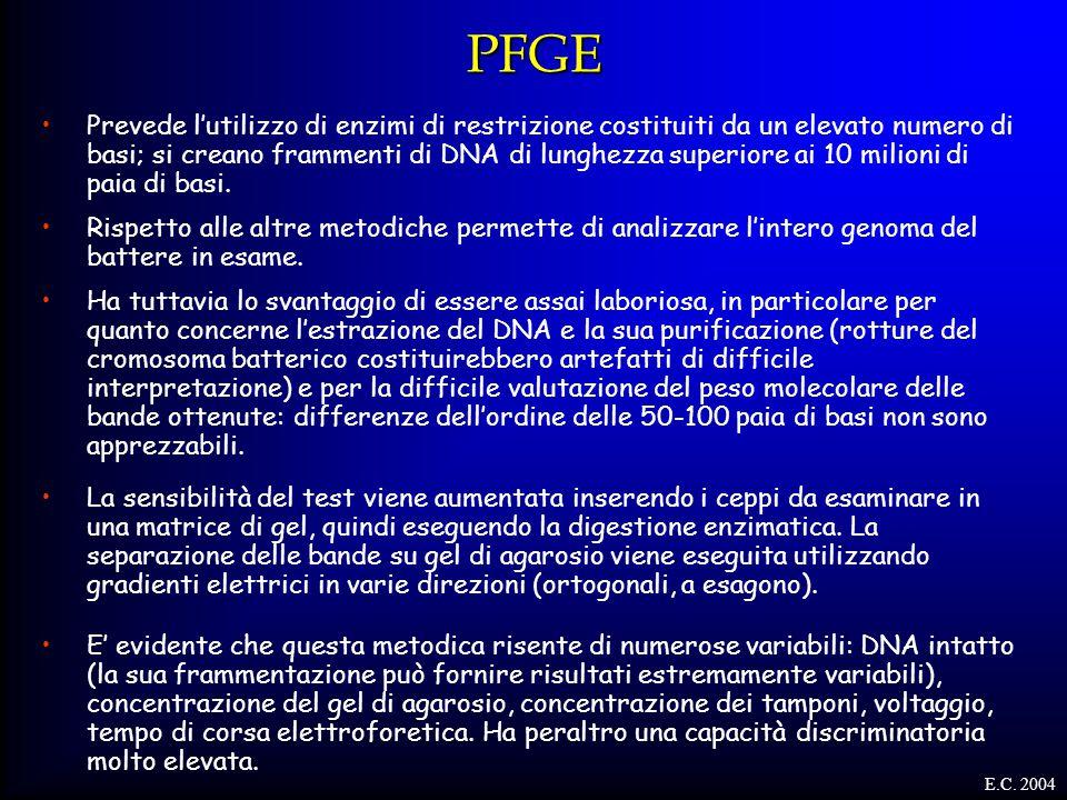 PFGE Prevede l'utilizzo di enzimi di restrizione costituiti da un elevato numero di basi; si creano frammenti di DNA di lunghezza superiore ai 10 mili