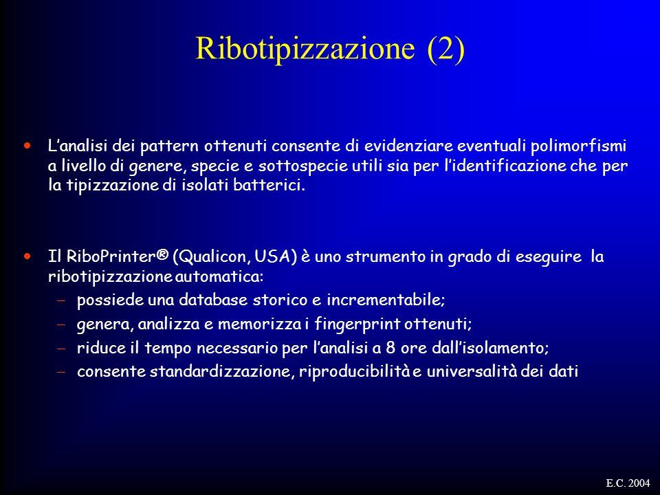 Ribotipizzazione (2)  L'analisi dei pattern ottenuti consente di evidenziare eventuali polimorfismi a livello di genere, specie e sottospecie utili s