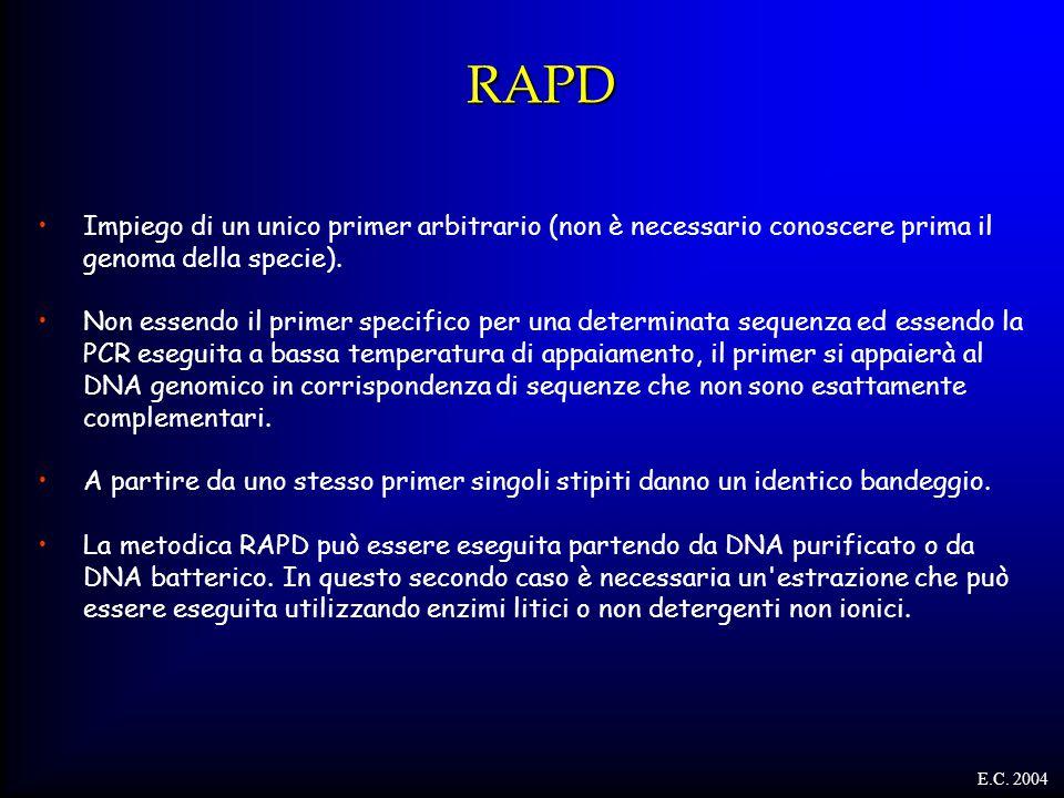RAPD Impiego di un unico primer arbitrario (non è necessario conoscere prima il genoma della specie). Non essendo il primer specifico per una determin