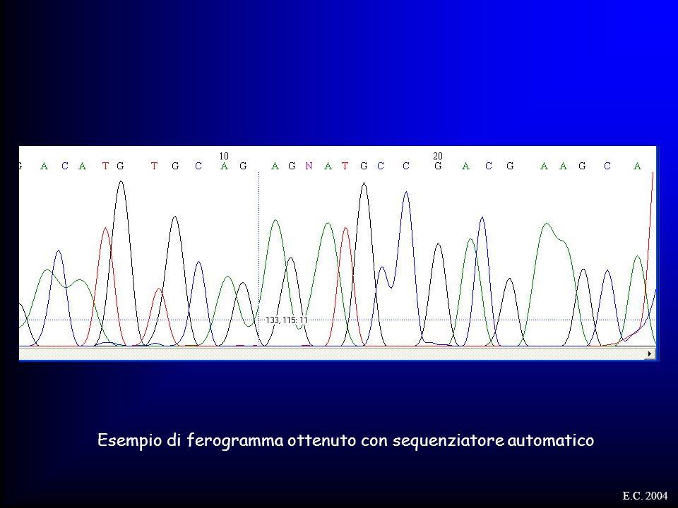 Esempio di ferogramma ottenuto con sequenziatore automatico E.C. 2004