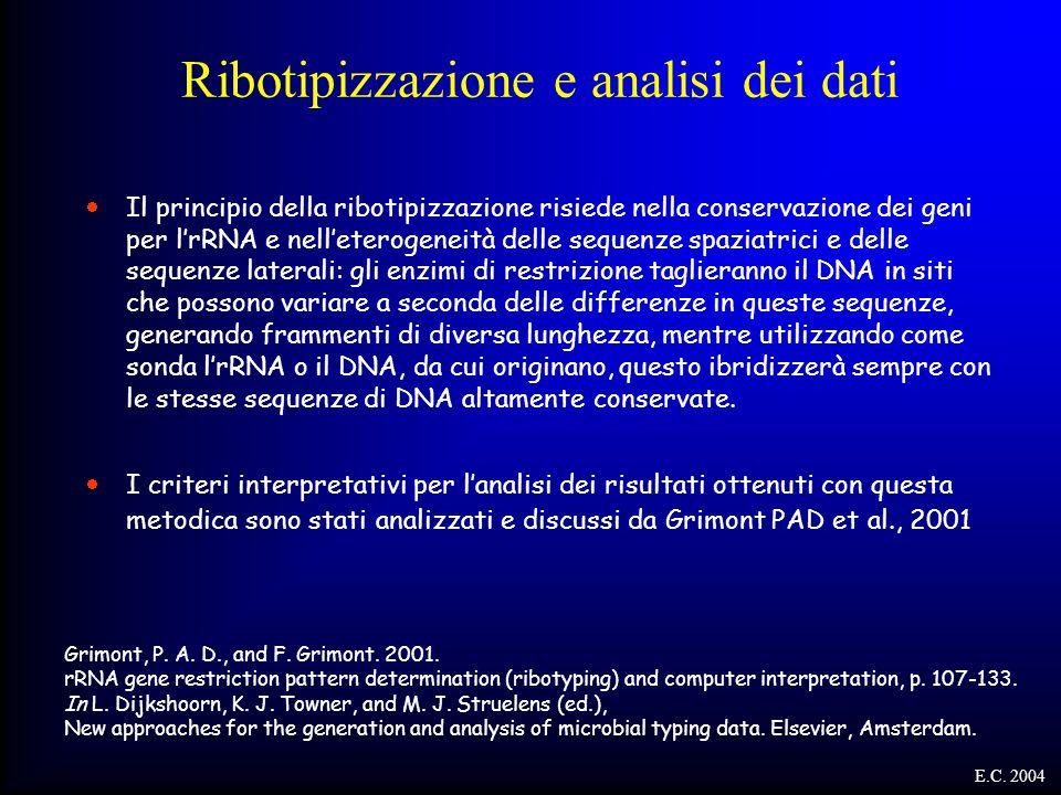 Ribotipizzazione e analisi dei dati  Il principio della ribotipizzazione risiede nella conservazione dei geni per l'rRNA e nell'eterogeneità delle se