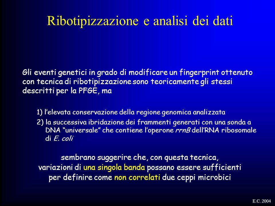 Ribotipizzazione e analisi dei dati Gli eventi genetici in grado di modificare un fingerprint ottenuto con tecnica di ribotipizzazione sono teoricamen