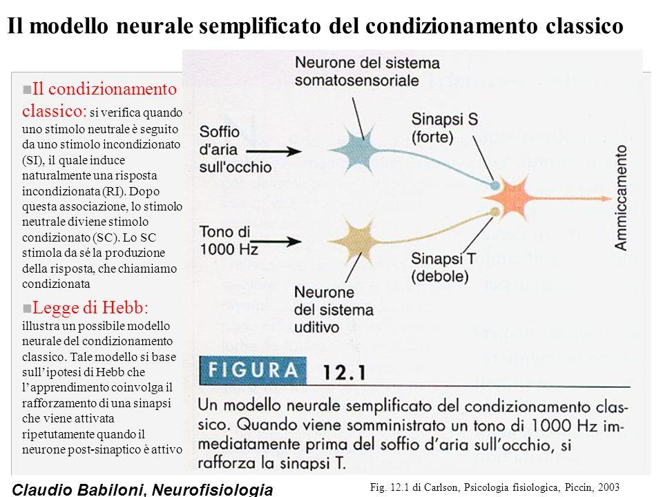 Claudio Babiloni, Neurofisiologia Circuiti nervosi implicati nel condizionamento classico n I circuiti nervosi: quando uno stimolo neutrale uditivo (SC) è seguito da uno stimolo incondizionato come la scossa ad una zampa (SI), i due tipi di informazione convergono nella porzione mediale del nucleo genicolato mediale del talamo e nell'amigdala laterale n Amigdala laterale: è connessa mediante il nucleo basolaterale al nucleo centrale, che è responsabile delle varie componenti della risposta emozionale.