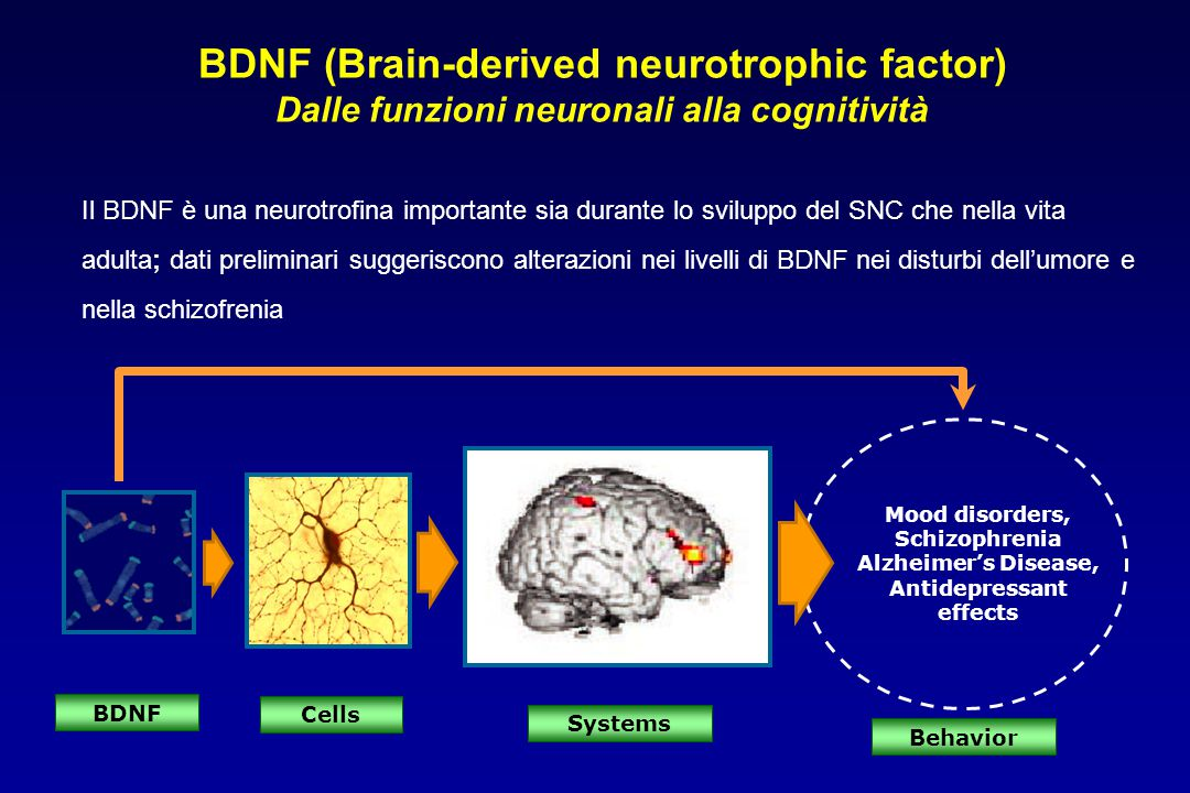 Mood disorders, Schizophrenia Alzheimer's Disease, Antidepressant effects BDNF Systems Behavior Cells BDNF (Brain-derived neurotrophic factor) Dalle f