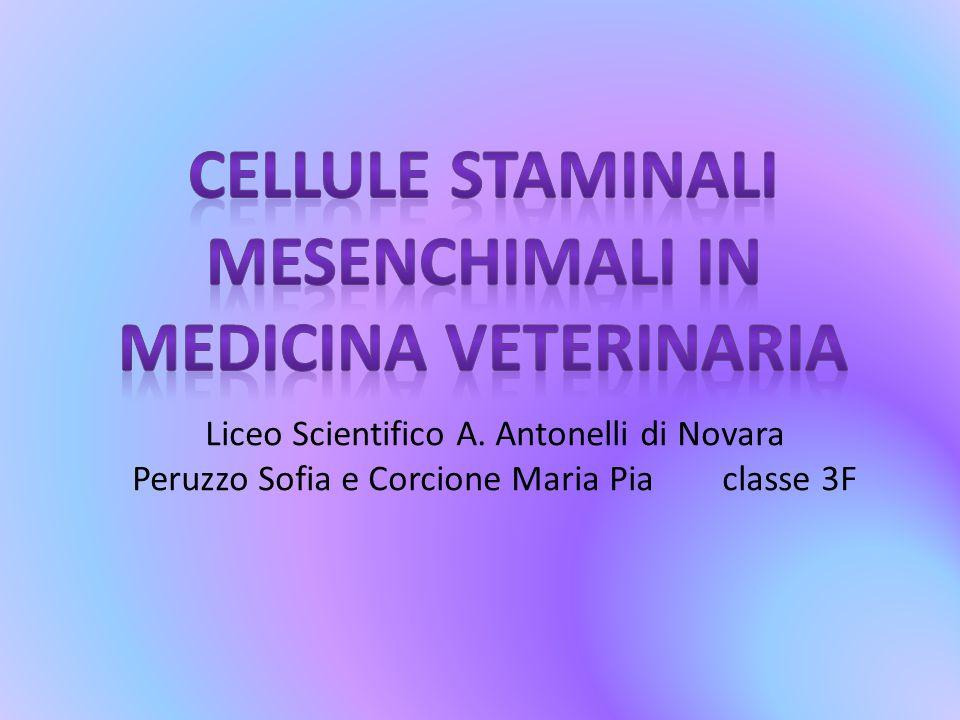 Liceo Scientifico A. Antonelli di Novara Peruzzo Sofia e Corcione Maria Pia classe 3F