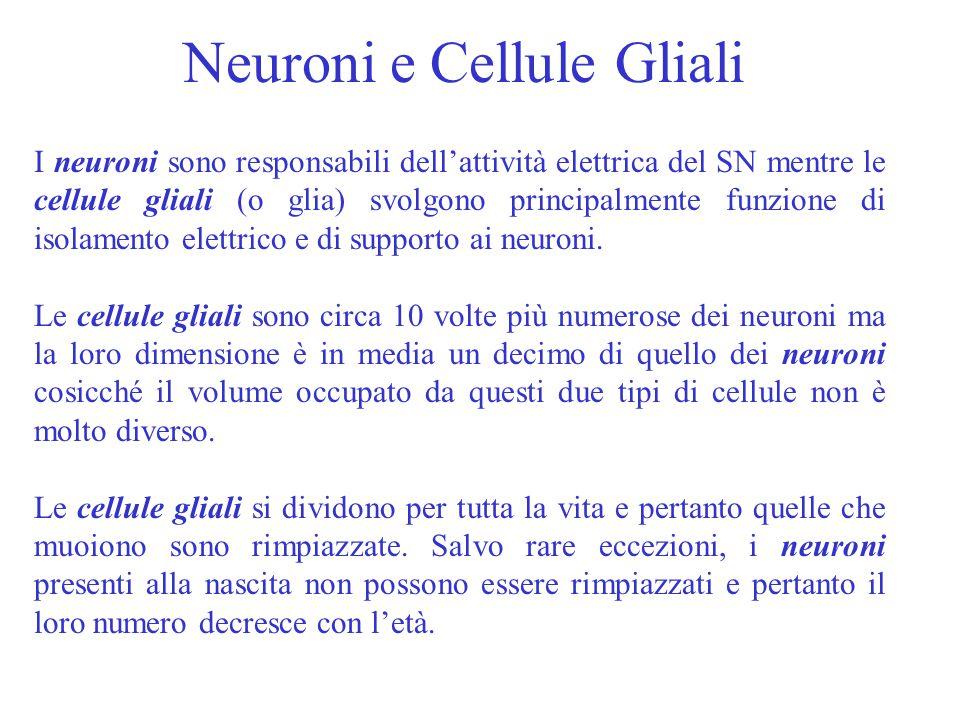 I neuroni sono responsabili dell'attività elettrica del SN mentre le cellule gliali (o glia) svolgono principalmente funzione di isolamento elettrico e di supporto ai neuroni.