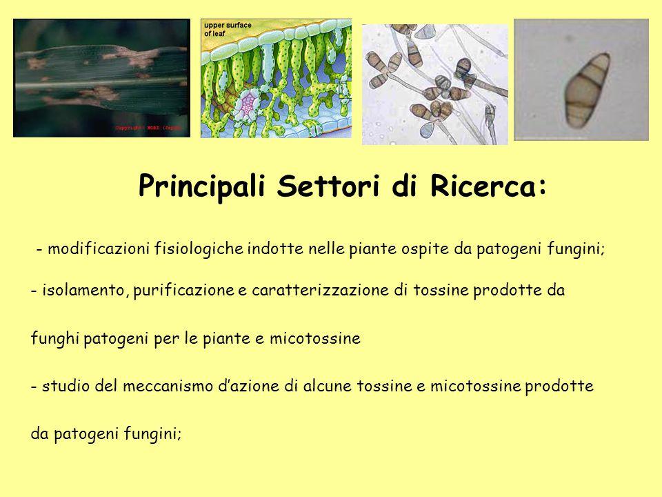 - modificazioni fisiologiche indotte nelle piante ospite da patogeni fungini; - isolamento, purificazione e caratterizzazione di tossine prodotte da f