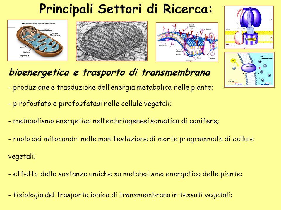 bioenergetica e trasporto di transmembrana - produzione e trasduzione dell'energia metabolica nelle piante; - pirofosfato e pirofosfatasi nelle cellul