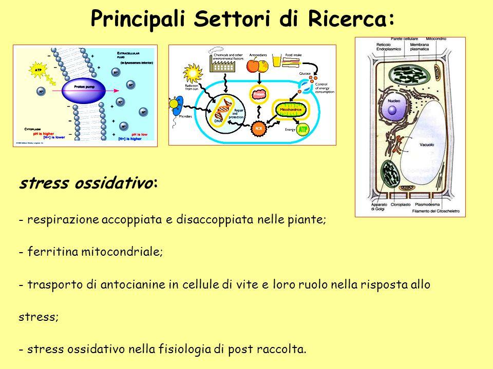 stress ossidativo: - respirazione accoppiata e disaccoppiata nelle piante; - ferritina mitocondriale; - trasporto di antocianine in cellule di vite e