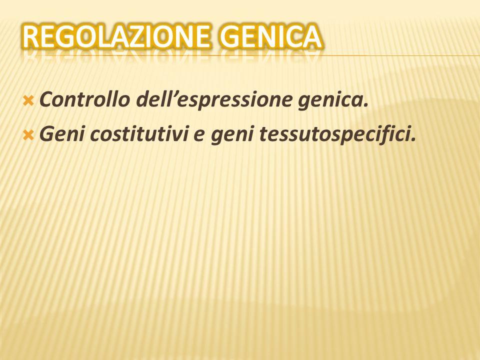  Controllo dell'espressione genica.  Geni costitutivi e geni tessutospecifici.