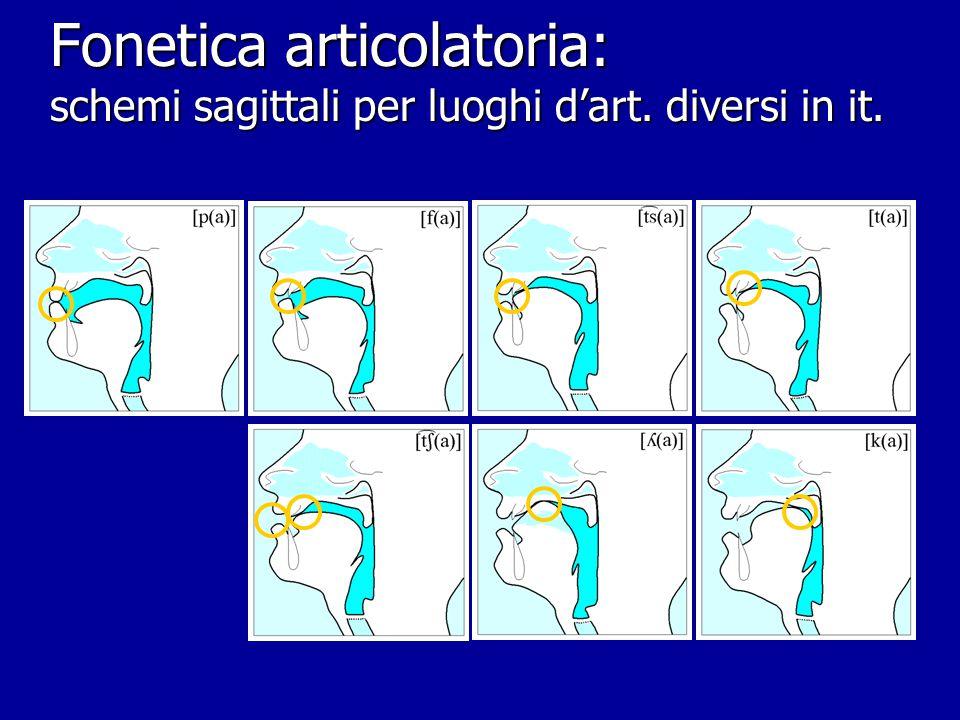 Fonetica articolatoria: schemi sagittali per art. vocaliche [i] ([a]  ) [i] [u] ([a]  ) [u]