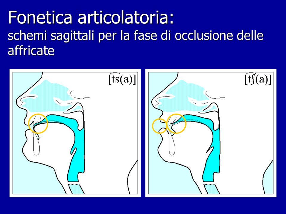 Fonetica articolatoria: schemi sagittali per i modi d'art. dell'it. articolazioni alveodentali