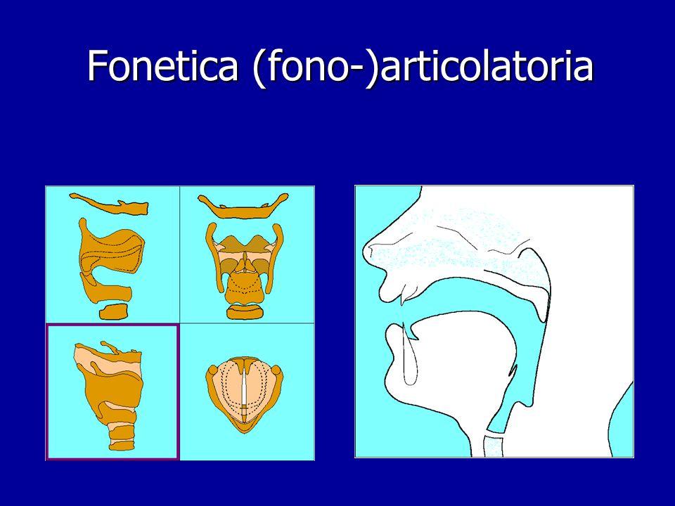 """Fonetica articolatoria, acustica e percettiva Fonetica articolatoriaFonetica """"uditiva"""" Fonetica acustica Schema della comunicazione audio-verbale"""