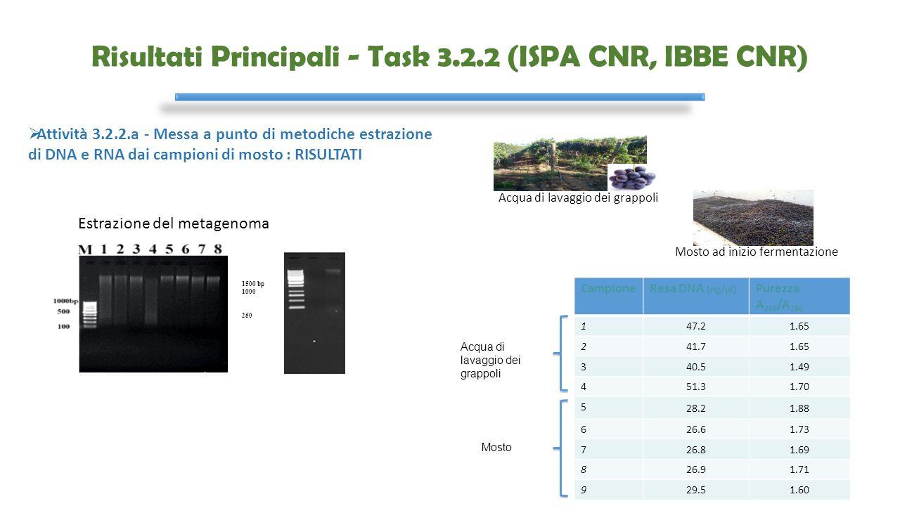Risultati Principali - Task 3.2.2 (ISPA CNR, IBBE CNR) Mosto ad inizio fermentazione Acqua di lavaggio dei grappoli CampioneResa DNA (ng/μl) Purezza A