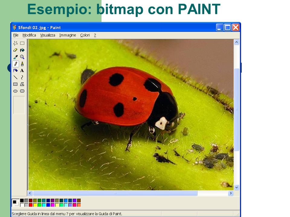 Formati Ci sono formati – PROPRIETARI: CPT per Corel PhotoPaint e altri – STANDARD: BMP: standard in Windows.