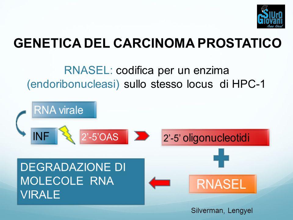 GENETICA DEL CARCINOMA PROSTATICO DEGRADAZIONE DI MOLECOLE RNA VIRALE RNASEL: codifica per un enzima (endoribonucleasi) sullo stesso locus di HPC-1 Si