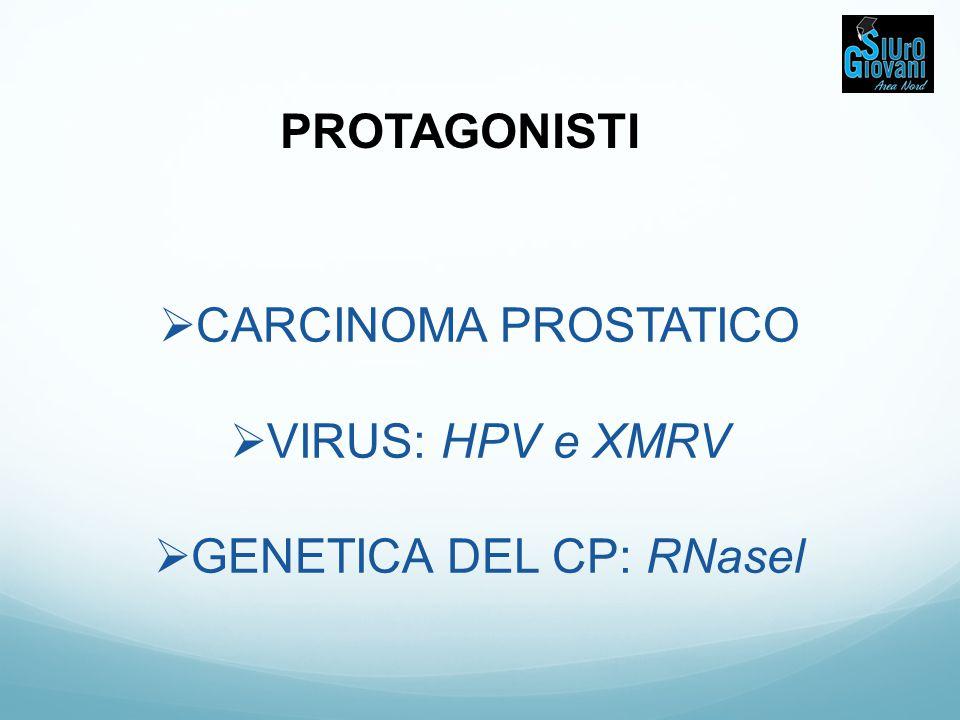 GENETICA DEL CARCINOMA PROSTATICO Mutazioni/varianti di RNASEL 35% della popolazione presenta una mutazione missenso in posizione 1385 1 allele mutato (eterozigosi): rischio CaP x 1.5 2 alleli mutati (omozigosi): rischio CaP x2 Allele Q riduce di 1/3 l'attività di RNASEL e si associa a diminuiti livelli di apoptosi In 462 (R462Q).