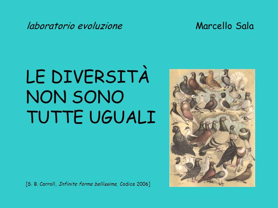 laboratorio evoluzione Marcello Sala LE DIVERSITÀ NON SONO TUTTE UGUALI [S. B. Carroll, Infinite forme bellissime, Codice 2006]