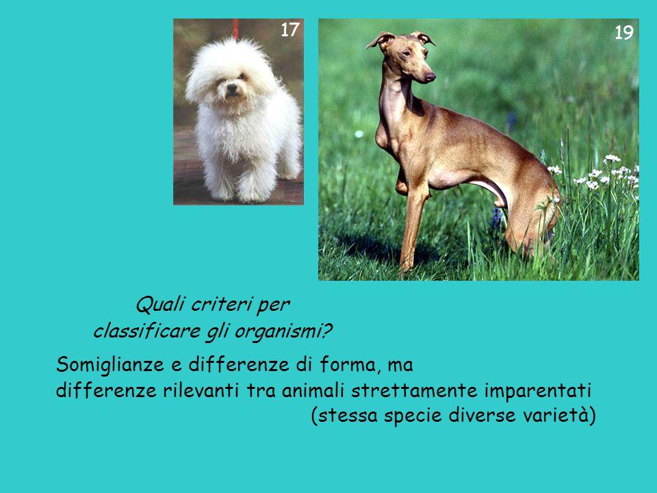 Quali criteri per classificare gli organismi? Somiglianze e differenze di forma, ma differenze rilevanti tra animali strettamente imparentati (stessa
