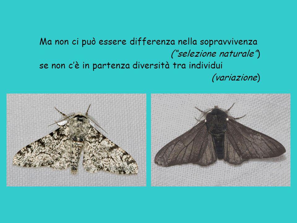 """Ma non ci può essere differenza nella sopravvivenza (""""selezione naturale"""") se non c'è in partenza diversità tra individui (variazione)"""