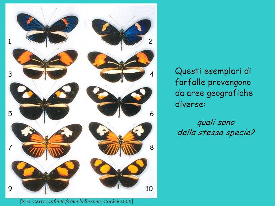 Questi esemplari di farfalle provengono da aree geografiche diverse: quali sono della stessa specie? 1 2 3 4 5 6 7 8 9 10 [S.B. Carrol, Infinite forme
