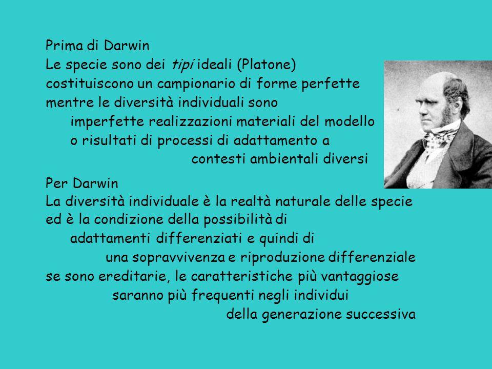 Prima di Darwin Le specie sono dei tipi ideali (Platone) costituiscono un campionario di forme perfette mentre le diversità individuali sono imperfett