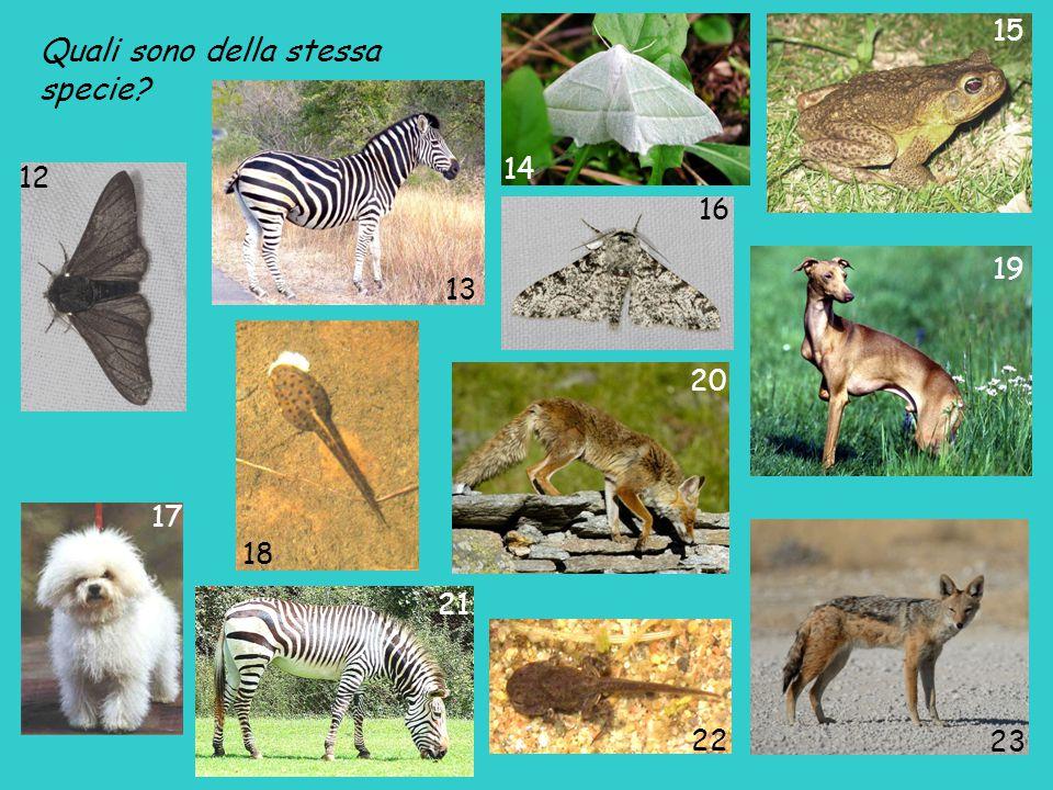 Sono della stessa specie: 1 - 6 pavone 3 – 7 - 10 colombo 2 - 9 farfalla Vanessa Atalanta 4 – 11 leopardo 15 – 18 - 22 rospo 12 – 16 farfalla Biston betularia 17 – 19 cane