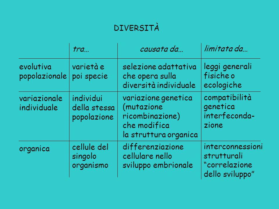 evolutiva popolazionale variazionale individuale organica tra… varietà e poi specie individui della stessa popolazione cellule del singolo organismo c