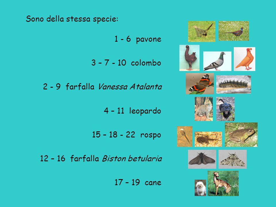 Darwin a proposito dei colombi: La diversità [...] di questi animali è veramente strabiliante.