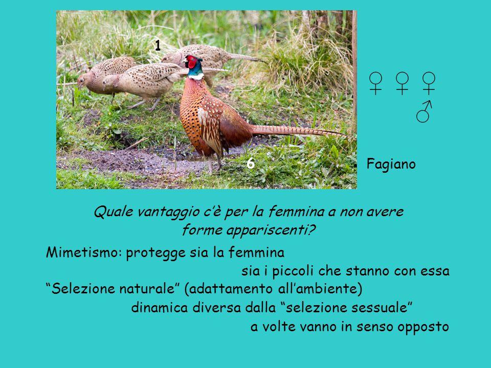 Ma allora i diversi tipi di colombi sono varietà di una specie o specie di un genere.
