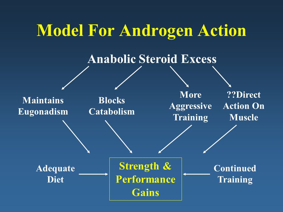 Model For Androgen Action Anabolic Steroid Excess Maintains Eugonadism More Aggressive Training Blocks Catabolism Adequate Diet Strength & Performance Gains Continued Training ??Direct Action On Muscle
