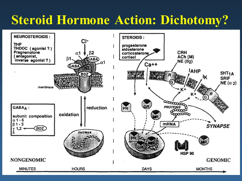 Steroid Hormone Action: Dichotomy?