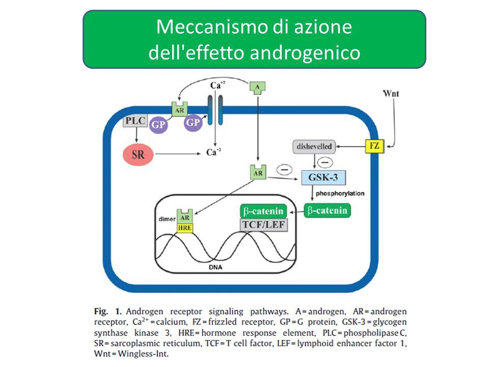 Meccanismo di azione dell'effetto androgenico