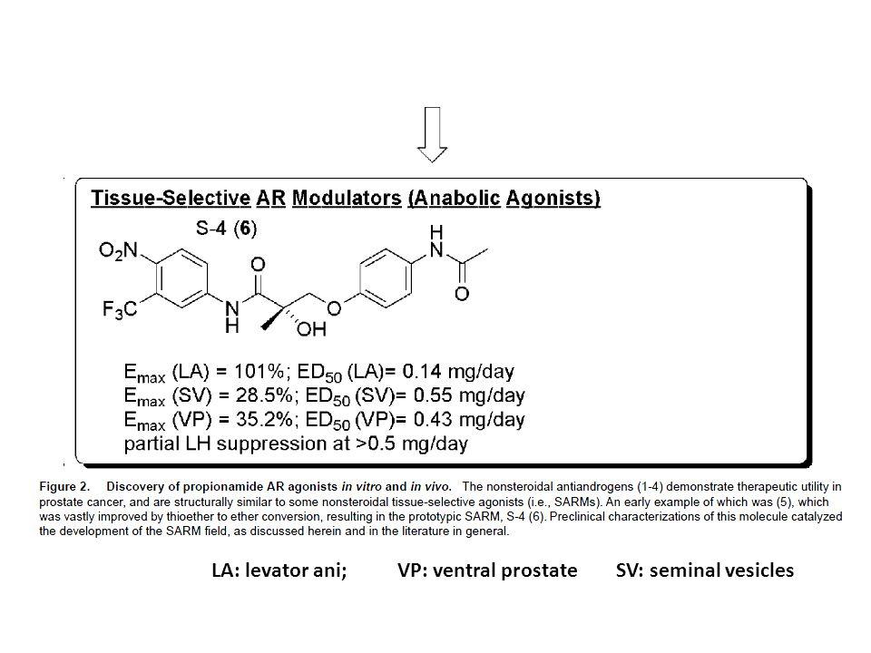 VP: ventral prostateSV: seminal vesiclesLA: levator ani;