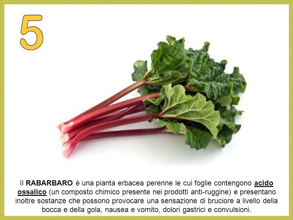 I POMODORI le cui foglie e gli steli, oltre ai frutti stessi, contengono la solanina un alcaloide considerato tossico, per cui si credeva che fossero