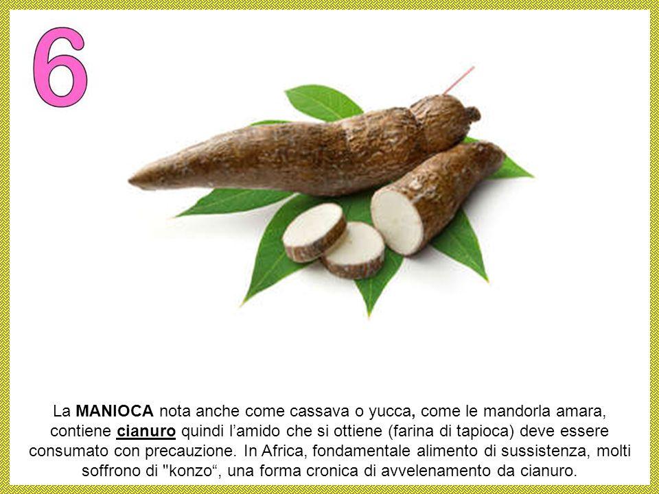 Il RABARBARO è una pianta erbacea perenne le cui foglie contengono acido ossalico (un composto chimico presente nei prodotti anti-ruggine) e presentan