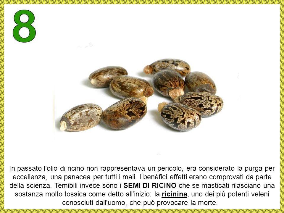 A differenza delle mandorle dolci, le MANDORLE AMARE che condividono proprietà antitumorali con quelle dei nòccioli di albicocca, possono contenere un