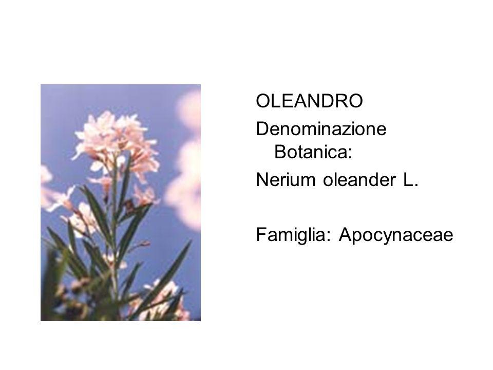 OLEANDRO Denominazione Botanica: Nerium oleander L. Famiglia: Apocynaceae