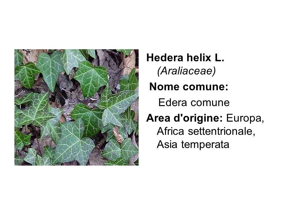 Hedera helix L. (Araliaceae) Nome comune: Edera comune Area d'origine: Europa, Africa settentrionale, Asia temperata