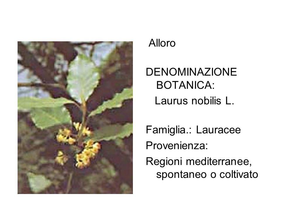 Alloro DENOMINAZIONE BOTANICA: Laurus nobilis L. Famiglia.: Lauracee Provenienza: Regioni mediterranee, spontaneo o coltivato