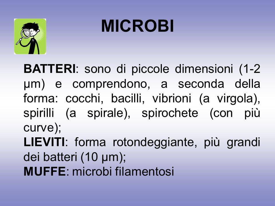 MICROBI BATTERI: sono di piccole dimensioni (1-2 µm) e comprendono, a seconda della forma: cocchi, bacilli, vibrioni (a virgola), spirilli (a spirale), spirochete (con più curve); LIEVITI: forma rotondeggiante, più grandi dei batteri (10 µm); MUFFE: microbi filamentosi