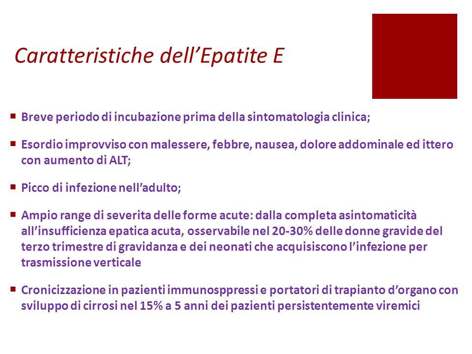 Caratteristiche dell'Epatite E  Breve periodo di incubazione prima della sintomatologia clinica;  Esordio improvviso con malessere, febbre, nausea,