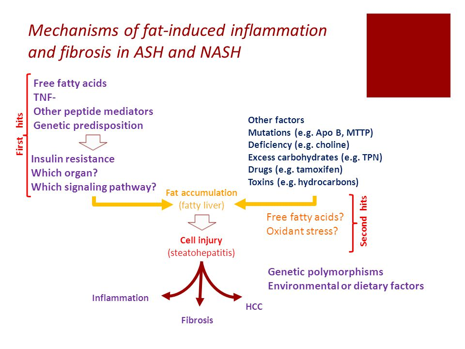 Mechanisms of fat-induced inflammation and fibrosis in ASH and NASH Free fatty acids TNF- Other peptide mediators Genetic predisposition Insulin resistance Which organ.