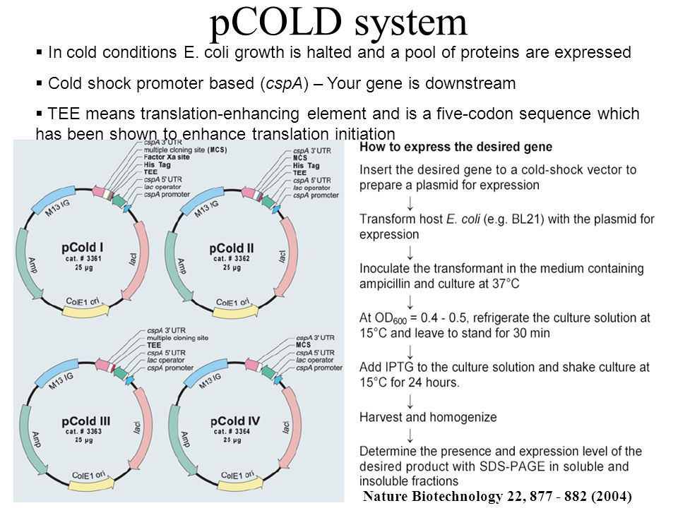 pCOLD system  In cold conditions E. coli growth is halted and a pool of proteins are expressed  Cold shock promoter based (cspA) – Your gene is down