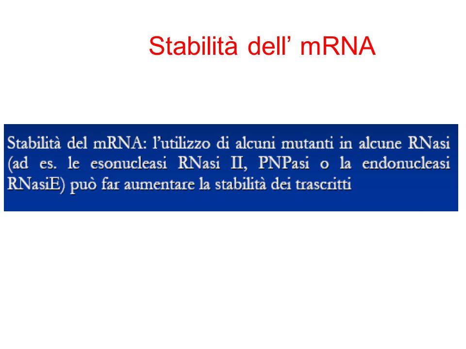 Stabilità dell' mRNA