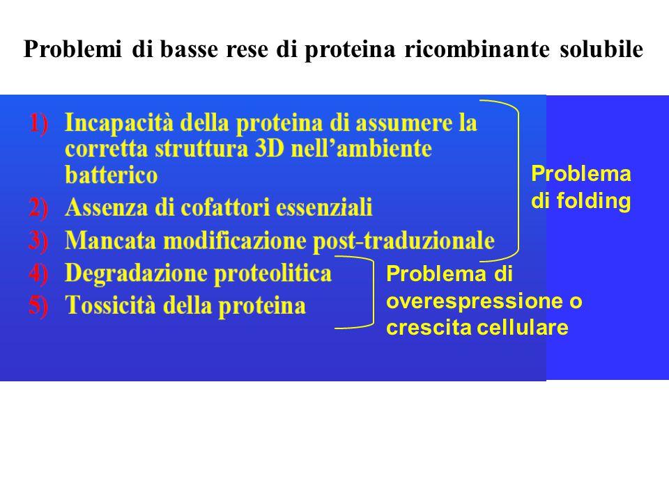 Problemi di basse rese di proteina ricombinante solubile Problema di folding Problema di overespressione o crescita cellulare