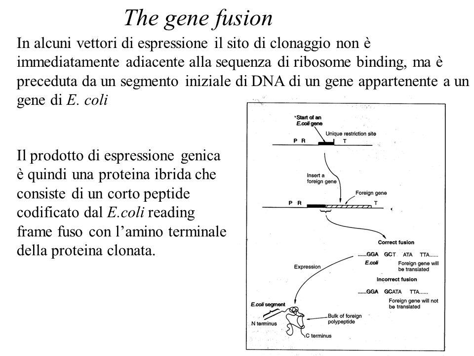 In alcuni vettori di espressione il sito di clonaggio non è immediatamente adiacente alla sequenza di ribosome binding, ma è preceduta da un segmento iniziale di DNA di un gene appartenente a un gene di E.