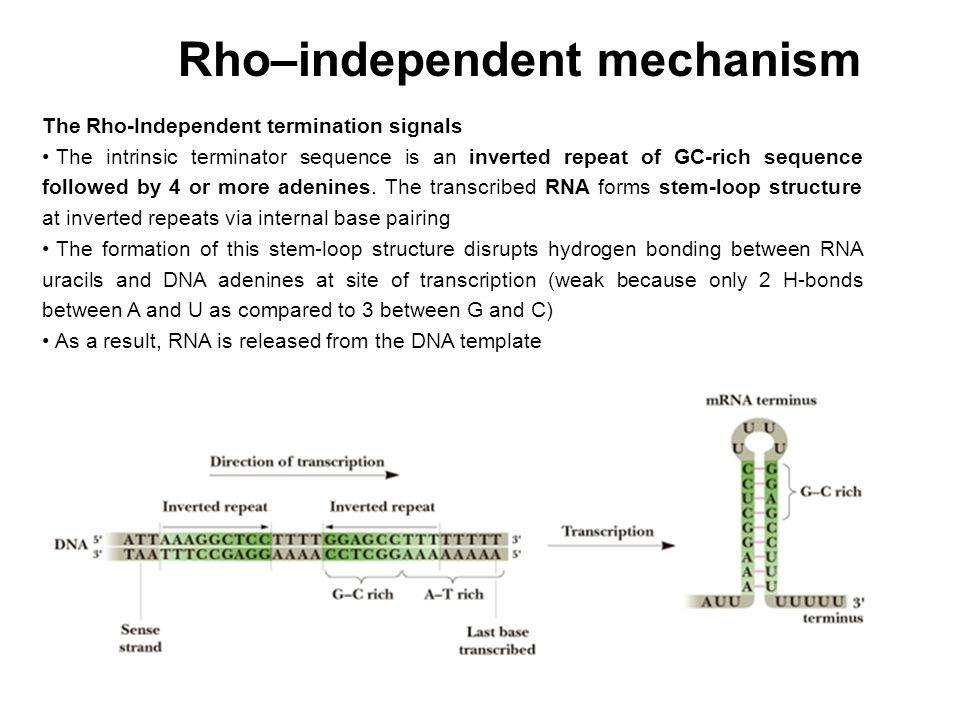 Affinity cromatography La fusione dell'ospite con la proteina glutatione-S-transferasi (GST) del E.coli permette di purificare la proteina ospite attraverso colonne contententi agarose beads che portano legato glutatione: