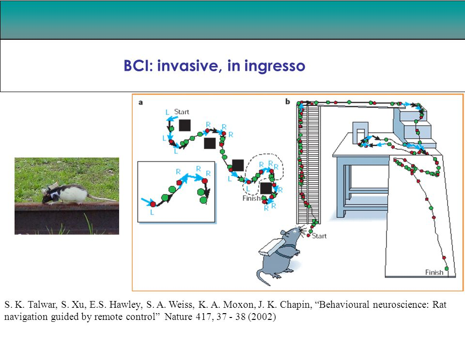 "BCI: invasive, in ingresso Guglielmo Tamburrini S. K. Talwar, S. Xu, E.S. Hawley, S. A. Weiss, K. A. Moxon, J. K. Chapin, ""Behavioural neuroscience: R"