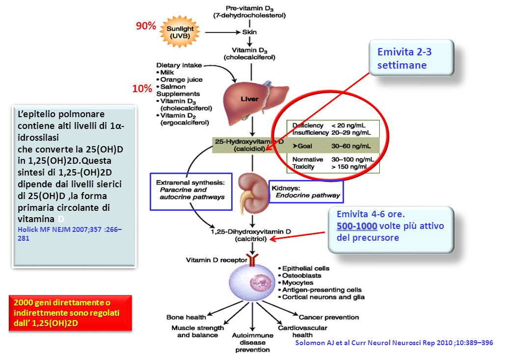 Bossè Y et al Respir Res 2009;10:98 GC=vitamin D binding protein Una variante omozigote del gene per il CYP2R1 (codifica l'enzima che catalizza la produzione di 25(OH)-vitamina D) si associa con un aumentato rischio di asma mentre varianti del gene che codifica il CYP24A1 (responsabile per la demolizione dell' 1,25(OH)2-vitamina D) si associa significativamente con i livelli di vitamina D Pillai DK et al J Investig Med 2011; 59:938–946 Vitamin D response element (VDRE) I livelli di vitamin D–binding protein sono più bassi nei neri probabilmente per l'alta prevalenza di comuni varianti genetiche.Più bassi livelli di vitamin D–binding protein nei neri comportano livelli biodisponibili di 25-OH vitamina D equivalenti a quelli nei bianchi.Per migliorare la determinazione dello status di vitamin D nelle diverse popolazioni sarebbe opportuno anche misurare la vitamina D–binding protein Powe CE et al NEJM 2013; 369:1991-2000